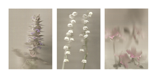 Three flowers photographed with a scanner for a three-dimensional look