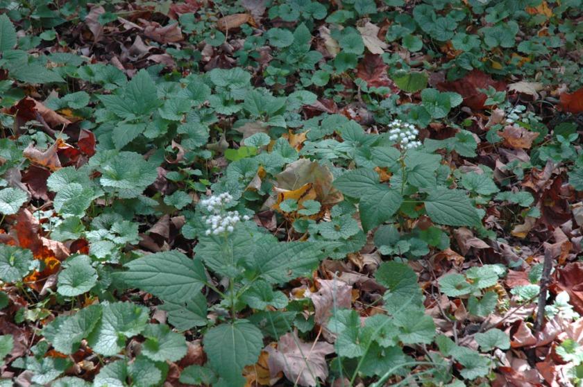 Little white wild flowers