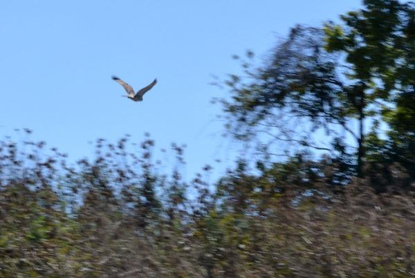 Slide Show Of Some Of My Bird Photos >> Slide Show Christine M Grote