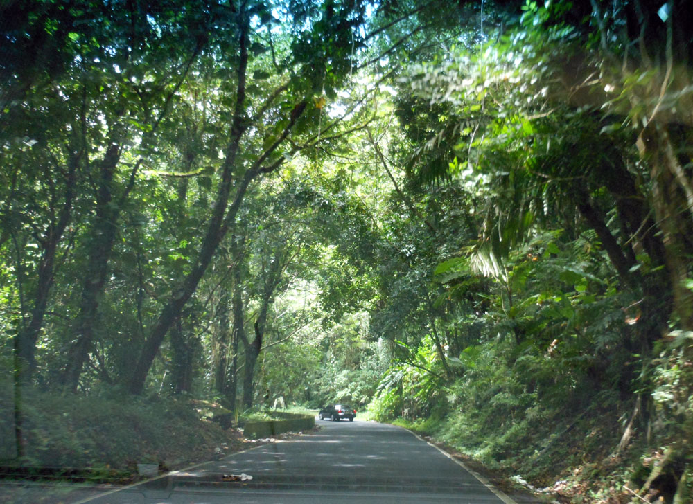Forests nature photos puerto rico rain forests travel 19 comments