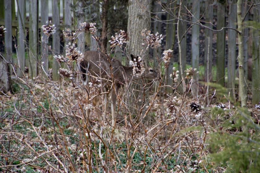01-Deer_2013-03-28