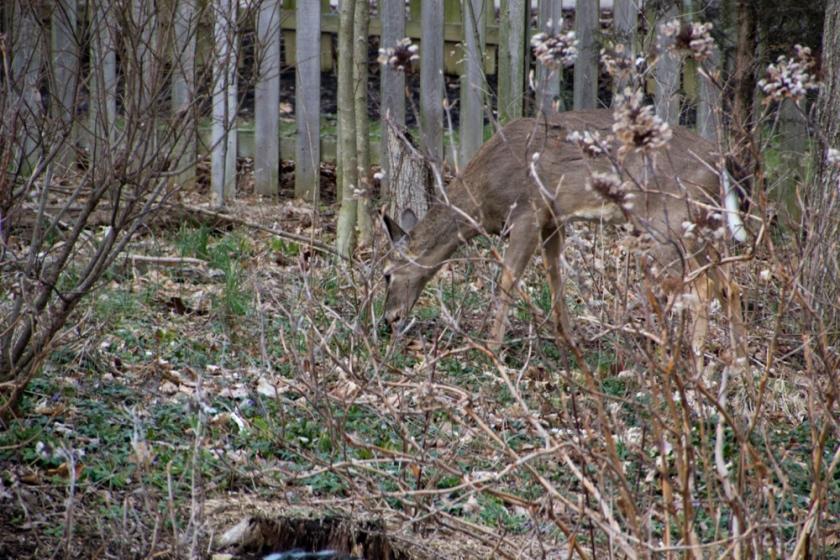 02-Deer_2013-03-28