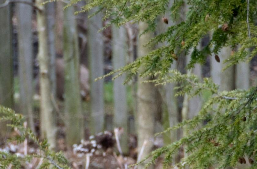 04-Deer_2013-03-28