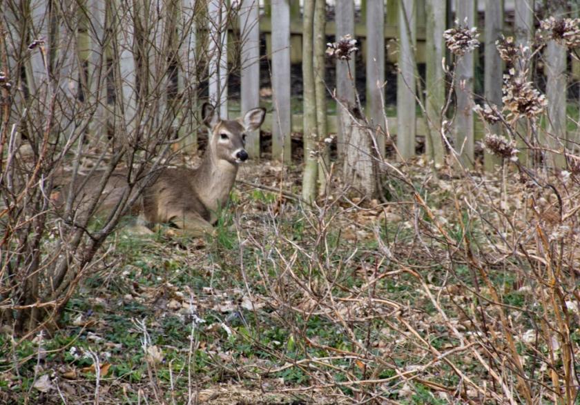 08-Deer_2013-03-28
