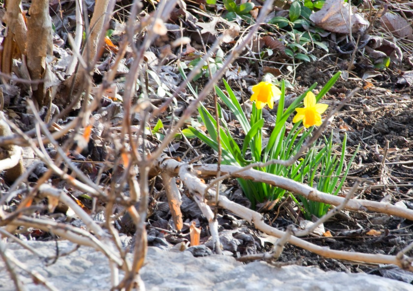 08-Signs_of_spring-2013-03-30