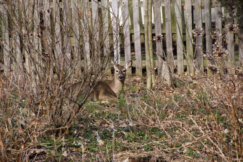 09-Deer_2013-03-28