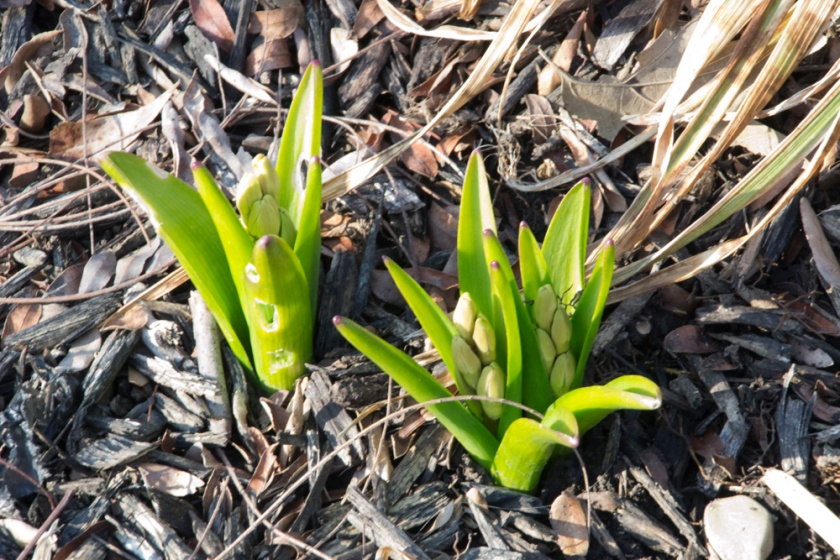 09-Signs_of_spring-2013-03-30