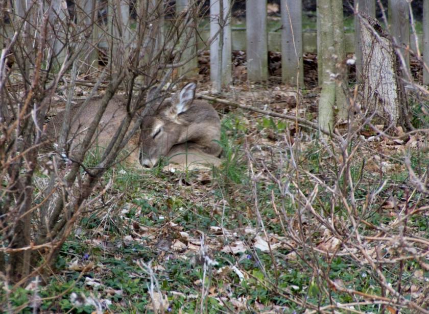 10-Deer_2013-03-28