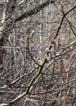 11-Signs_of_spring-2013-03-30