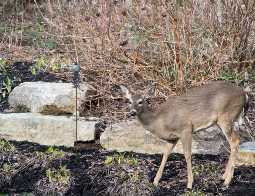 12-Deer_2013-03-28
