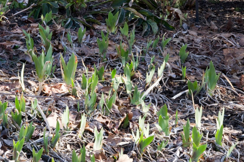 12-Signs_of_spring-2013-03-30