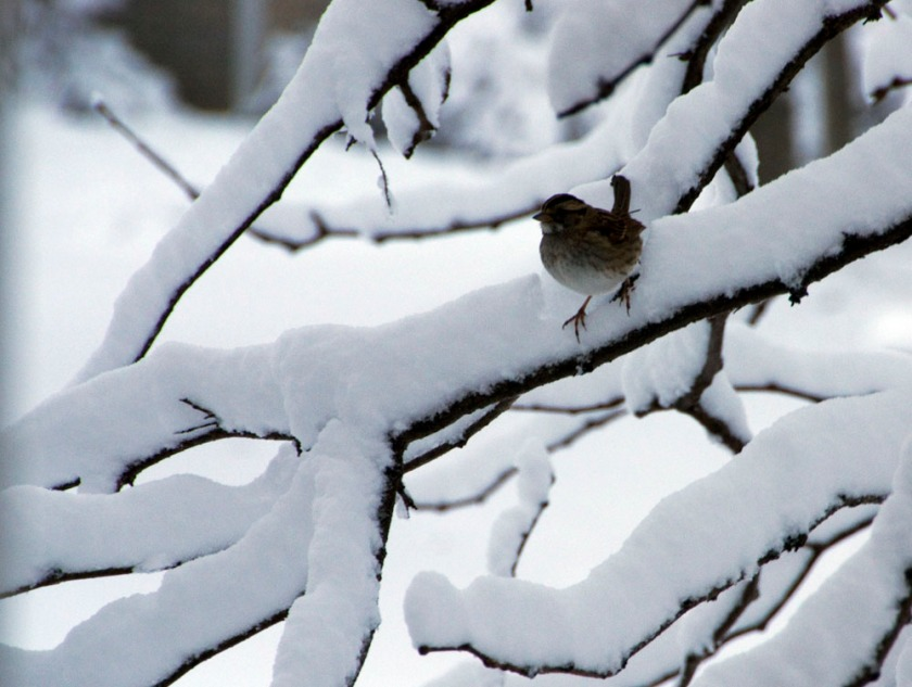 blog-02-snowfall-2013-03-06