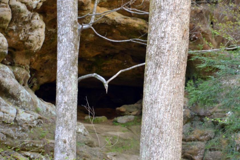 02-Ash_Cave-2013-04-23