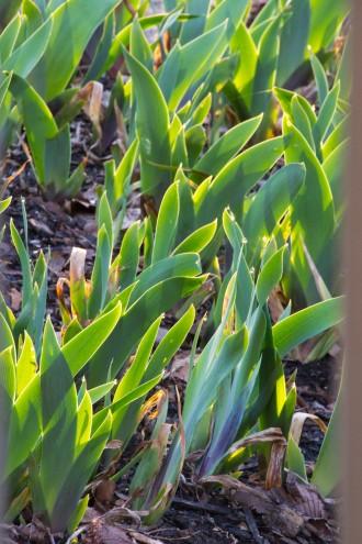 02-iris_droplets-2013-04-09