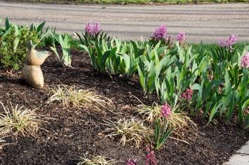09-hyacinths-April_10_2013- _15
