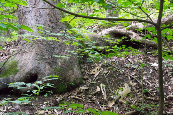 02-tree_roots-2013-07-28-02