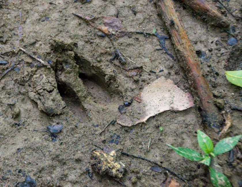 03-deer-track-2013-07-28-07