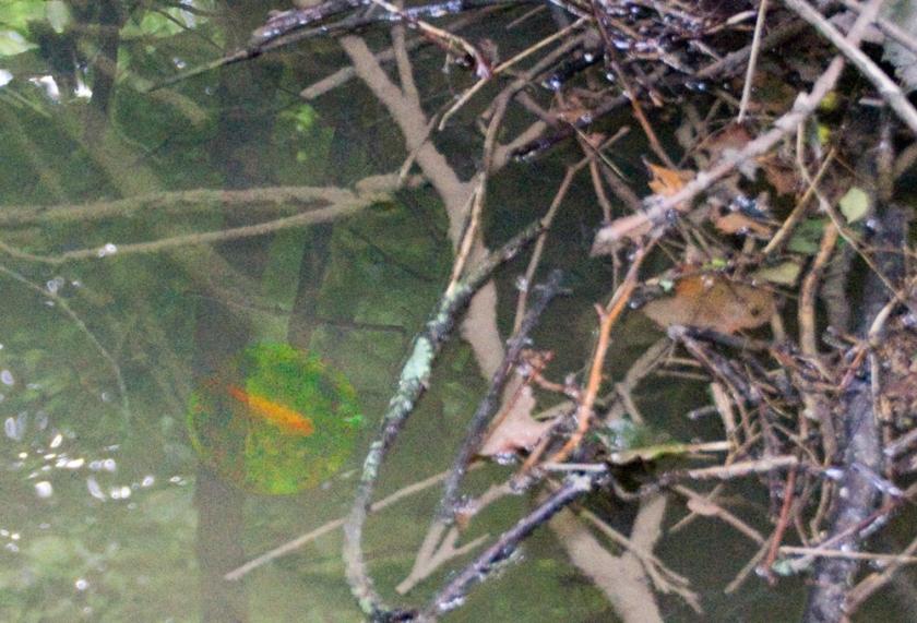 07-goldfish-2013-07-28-22