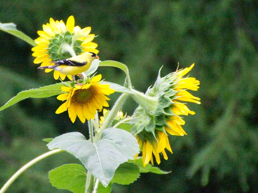 08-Yellow-2013-06-04