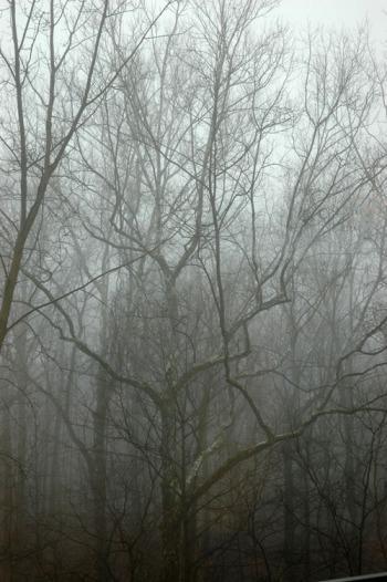 Foggy_500-2013-07-14