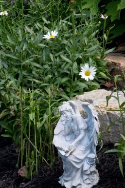 The last few daisies