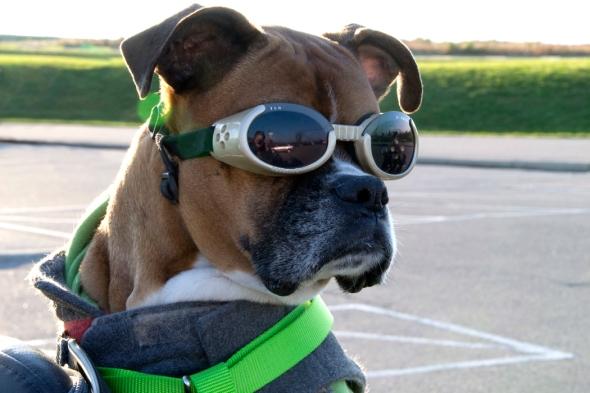 01-Biker_dog-sm-2013-11-09