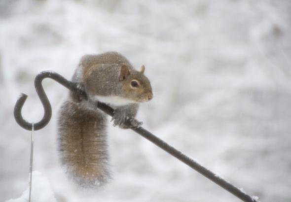 01-Squirrel-2014-01-02
