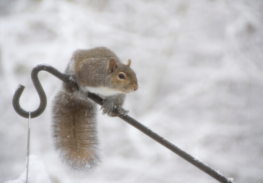 01-Squirrel-2014-01-02