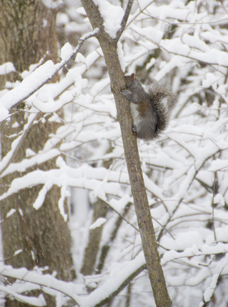 08-squirrel-2014-01-02