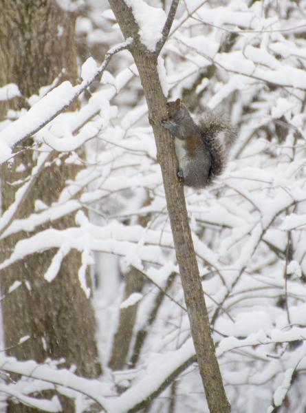 08-squirrel-2014-01-02