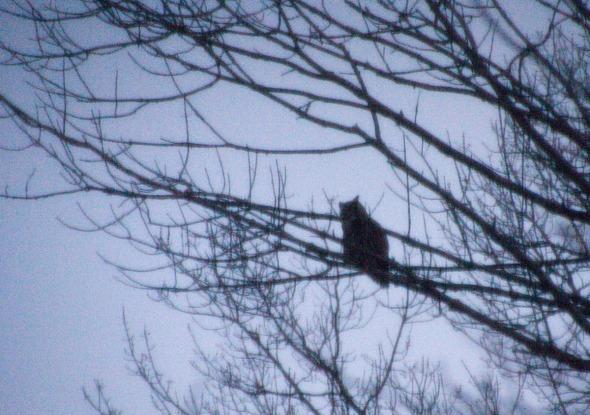 Owl-2014 - 01-09-8-48am