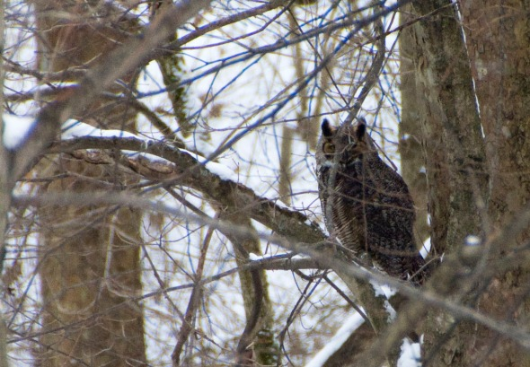 Owl-2014 - 01-25