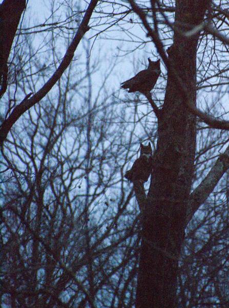 Owls-2013-12-23-9am