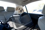 2014 - 02-03-Arthur in car-3