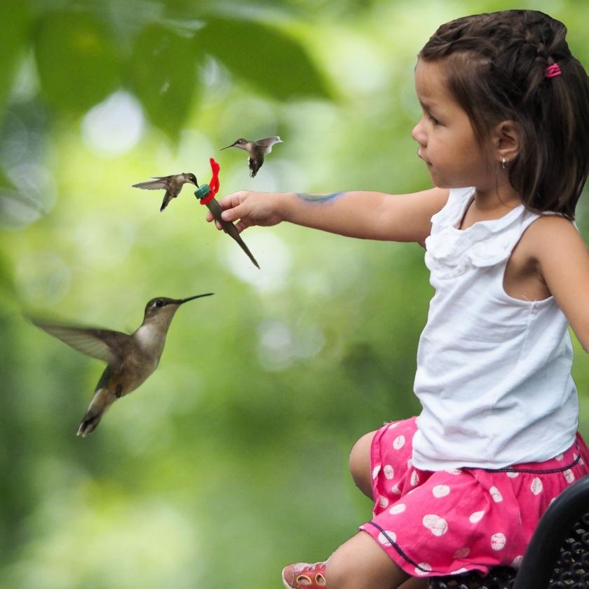 Hummingbirds, photoshop